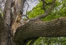 Warnung vor Astabbrüchen in preußischen Parks