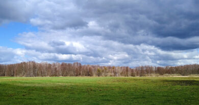Herbststurm mit orkanartigen Böen nähert sich Brandenburg und Berlin